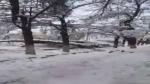 Бишкекте дарак менен электр карагайы кулады