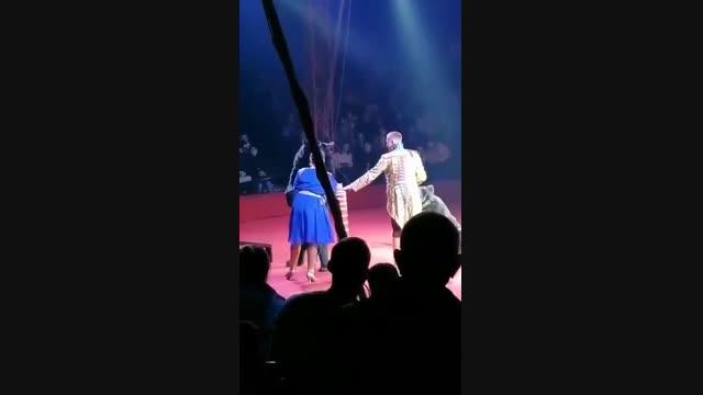 Орусияда циркте аюу оюн учурунда машыктыруучунун жардамчысына кол салды